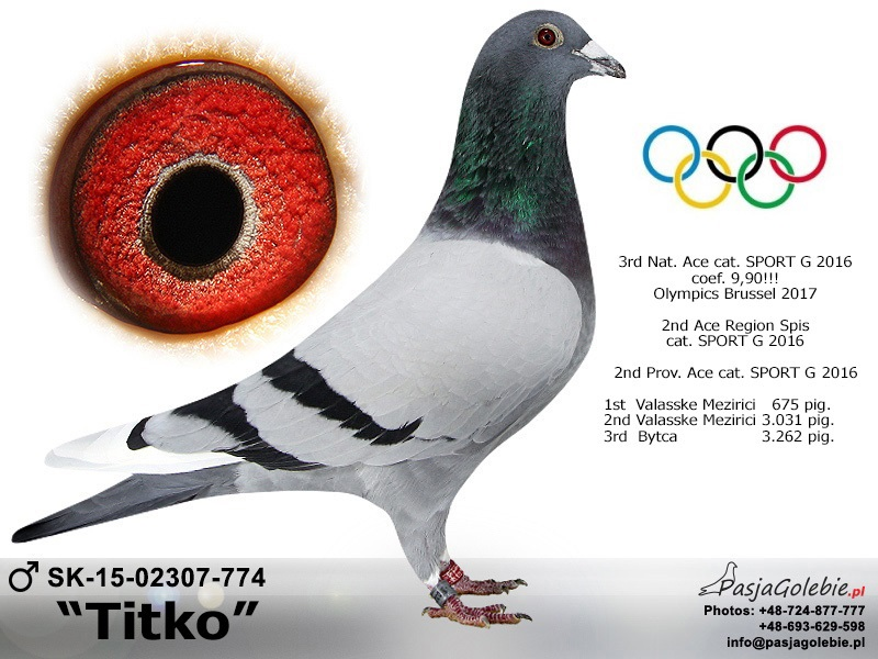 http://www.pigeonsteam.wz.cz/eso_holuby/fota/774.jpg